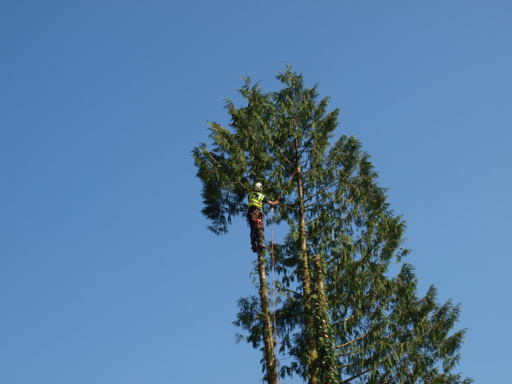 North Wales Tree Surgery