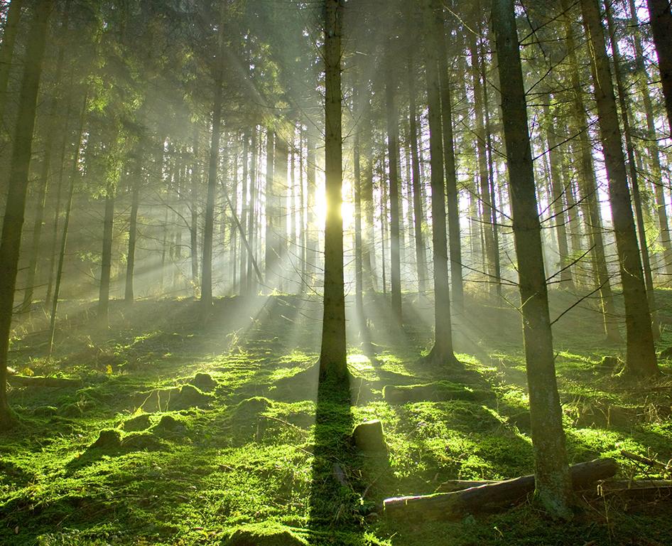woodland mangement